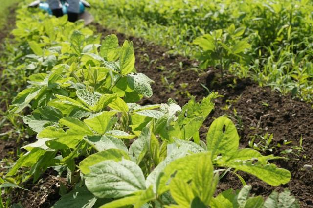 無肥料自然栽培