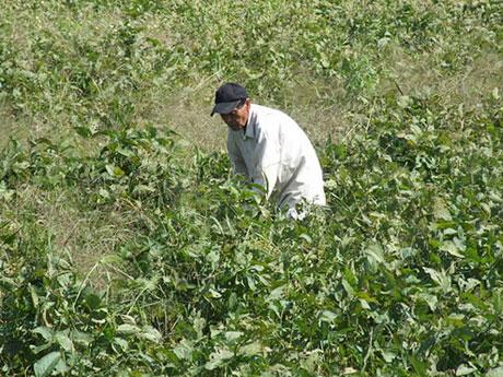 味噌屋が始めた大豆畑トラスト運動を募集