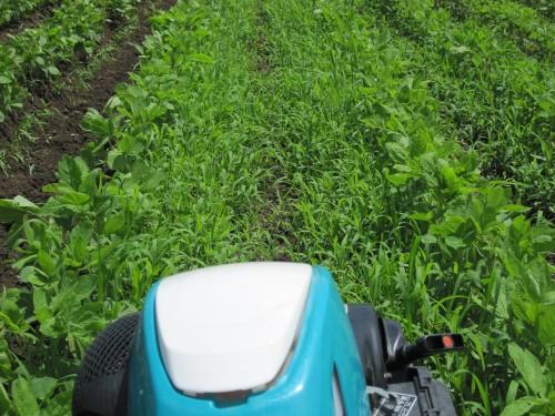 ひたすら畝作り。