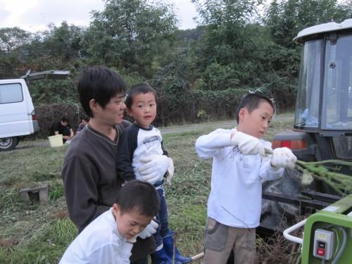 枝豆収穫作業 莢のもぎ取り