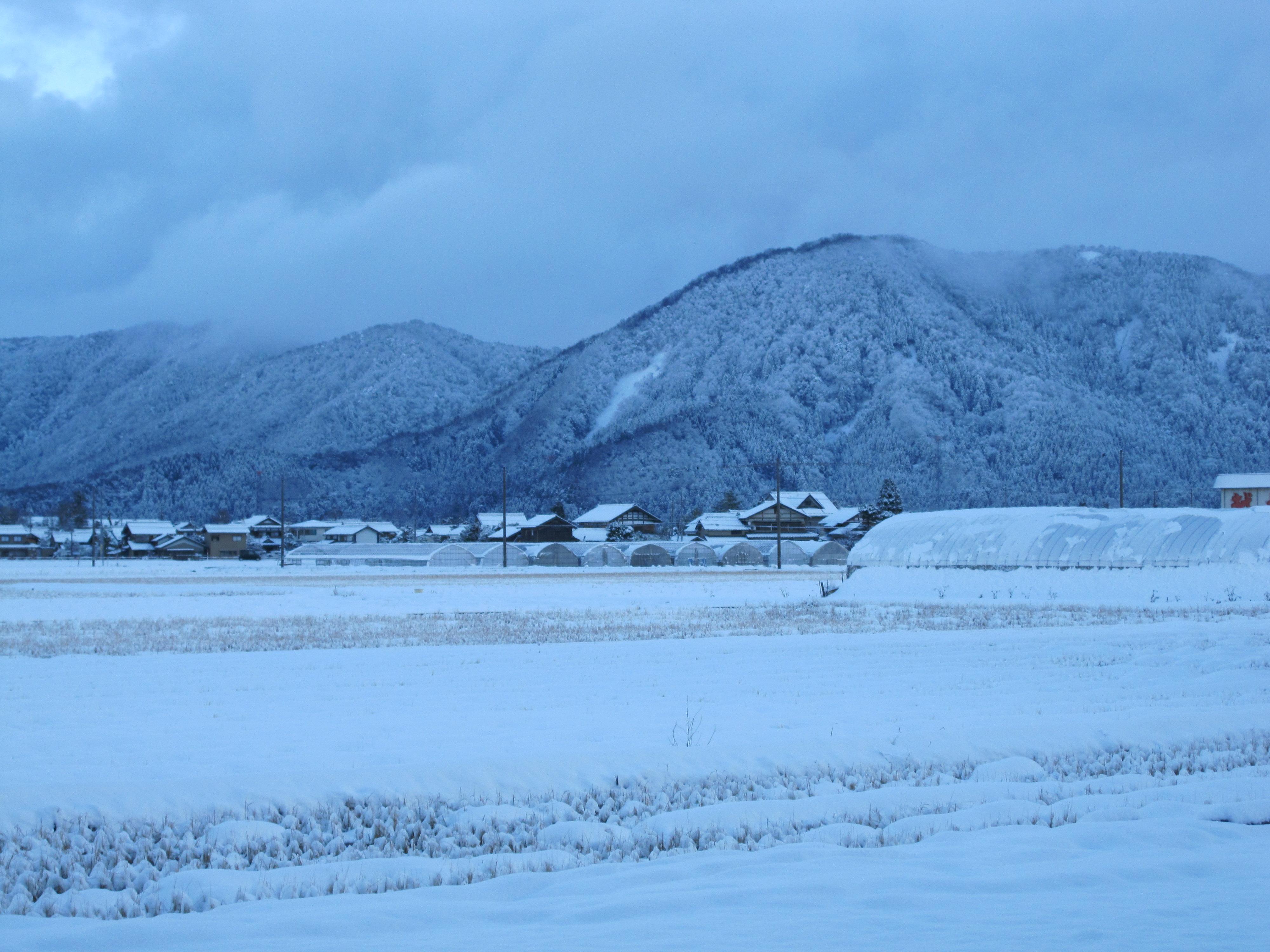 福井の雪化粧された田園風景
