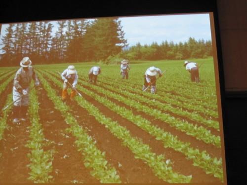 大規模自然栽培といえども手除草をするときがある