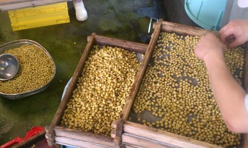 マルカワみその蔵つき麹菌採取する作業