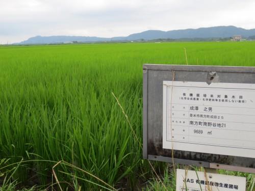 有機認証もある成澤農園の圃場