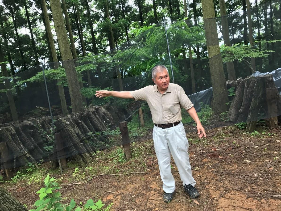 愛媛の原木しいたけ農家さんにお伺い